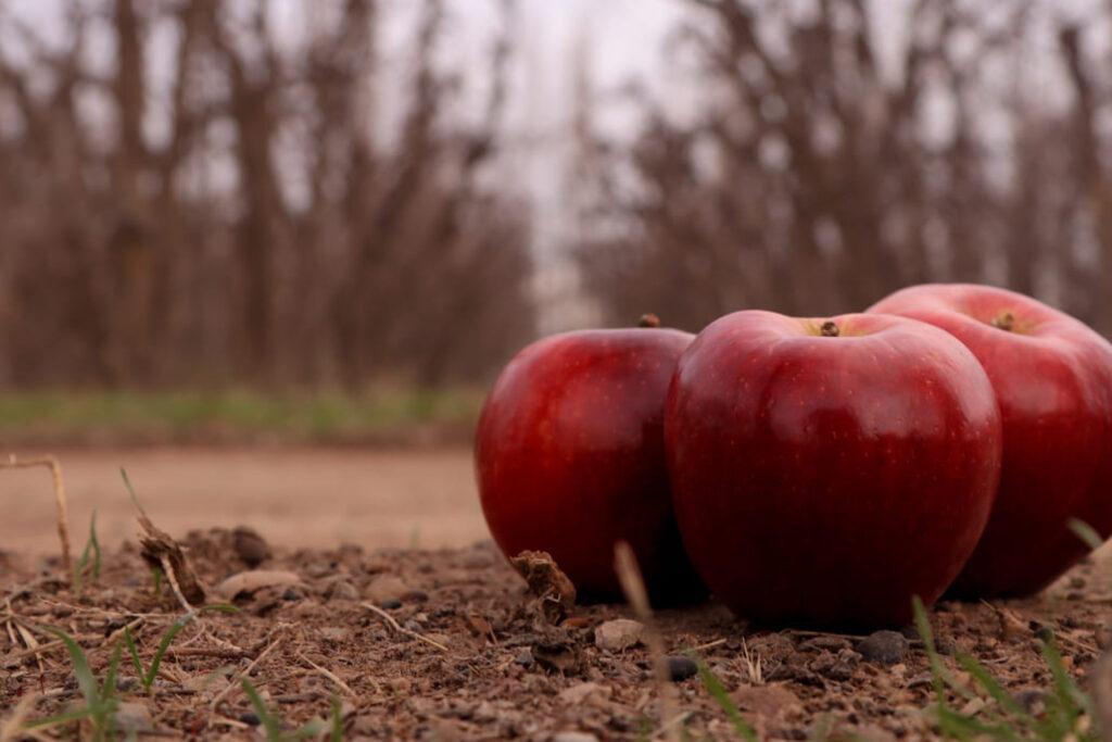 manzanas tierra frutas puesto 88